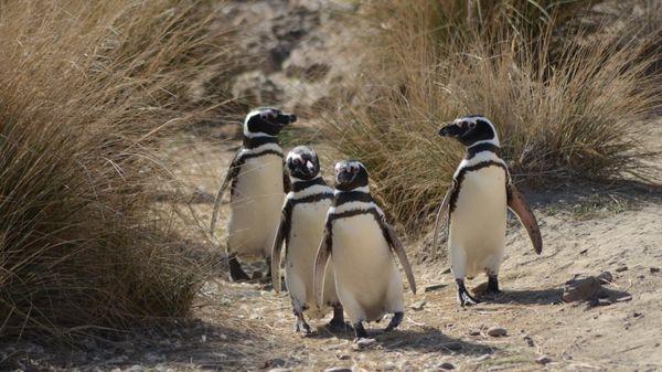 Actividades Puerto Madryn