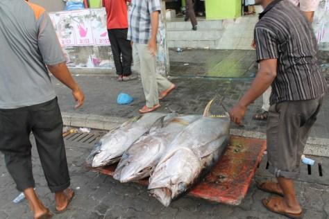 Yellow fin tuna in the Maldives.