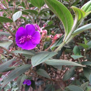 I'm not a botanist so I don't know what it's called.