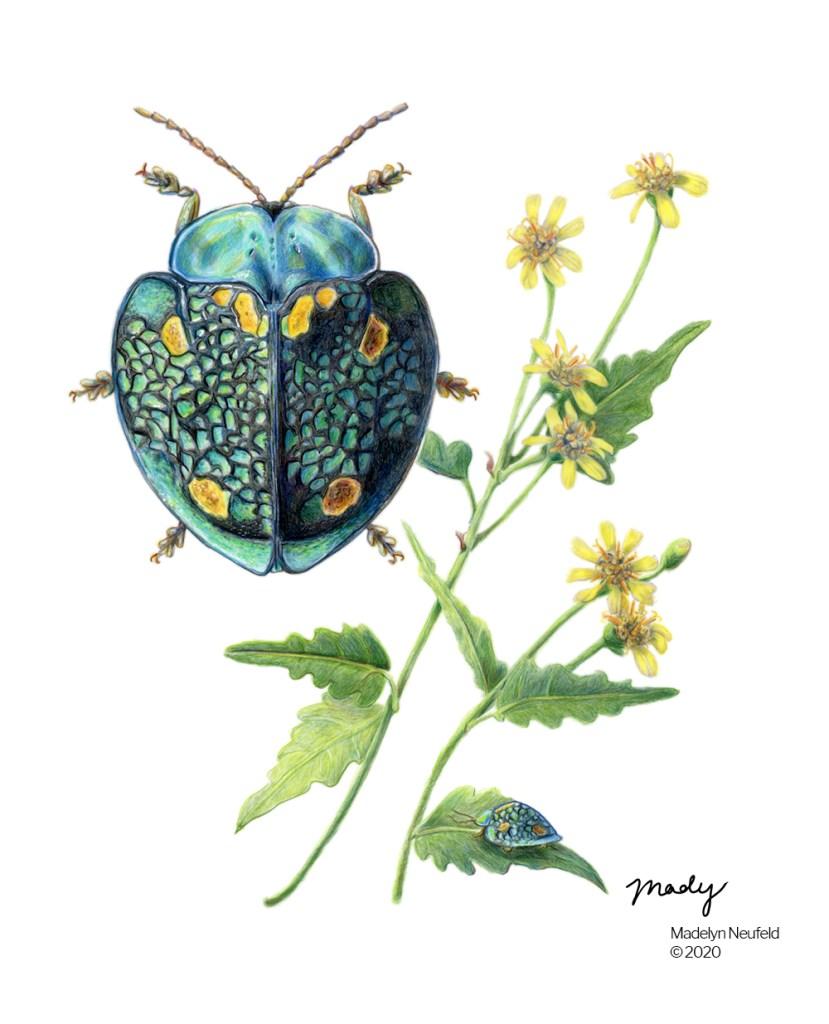 color science illustration madelyn neufeld