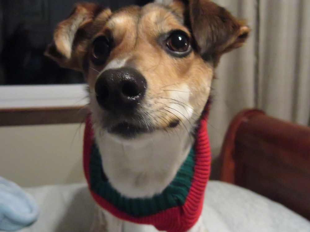 Pixie Christmas Attire 1