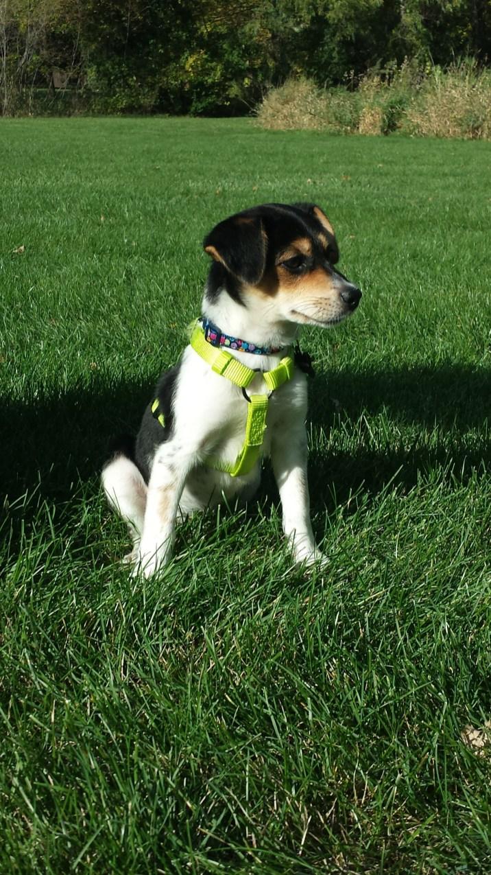 Pixie Puppy