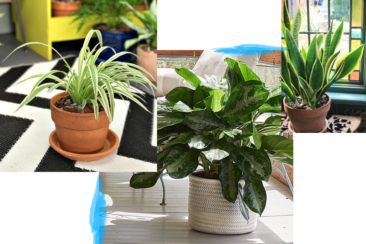 Indoor House Plants.jpg