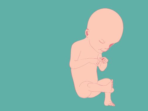 21 semanas de gravidez