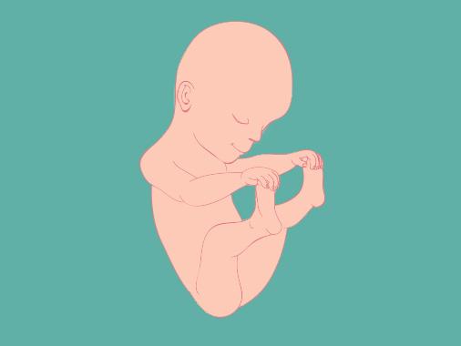 25 semanas de gravidez