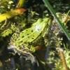 Das Froschmädchen Märchen