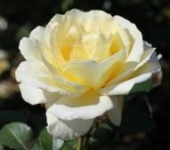 Rote und weiße Rose. Märchen