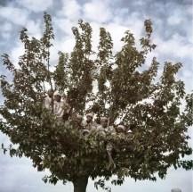 Espectadores observando la visita del sultán Sidi Mohammed de un árbol, Fez, Marruecos, 1949.