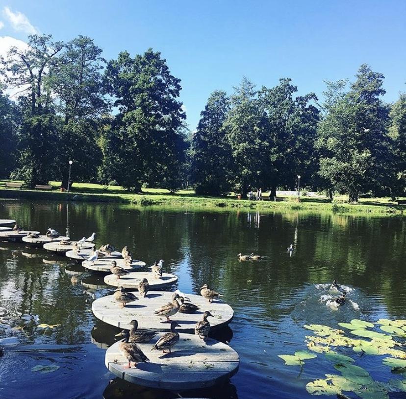городской парк плантаже в зеленоградске калининградская область утки