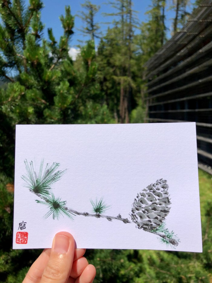 Larch cone postcard