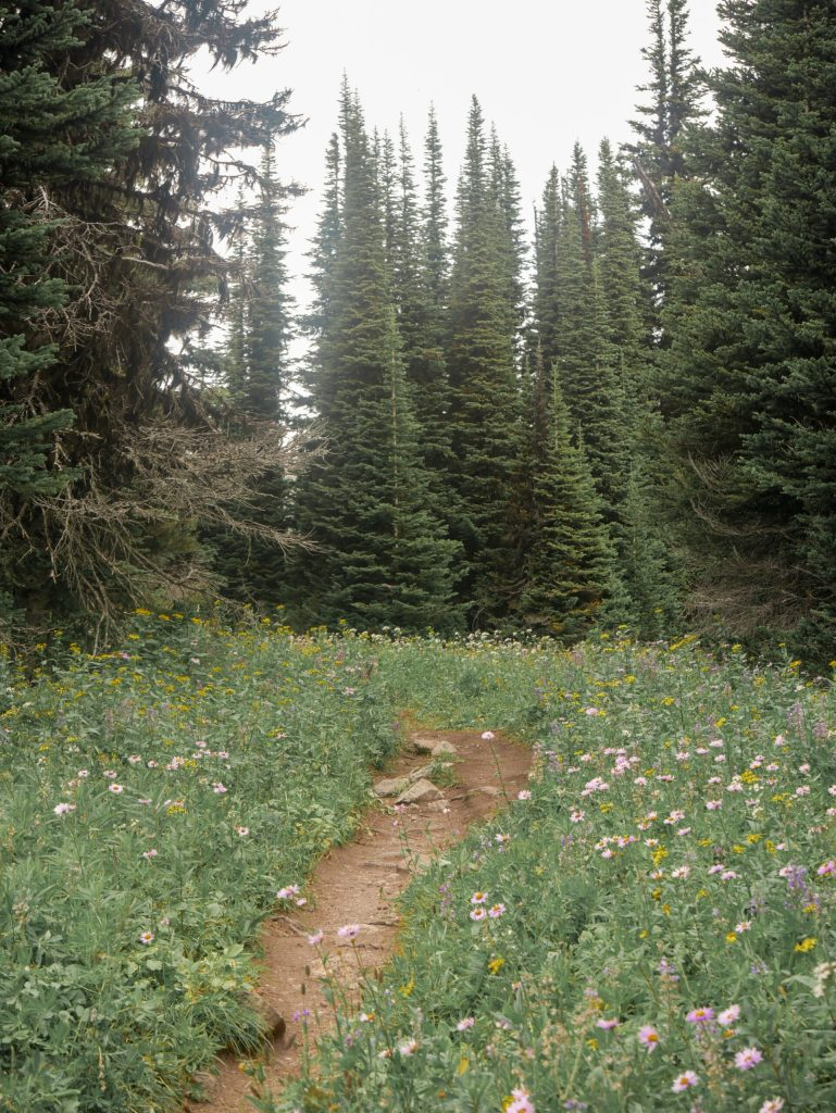 Wells Gray Provincial Park TRophy Mountain Trail