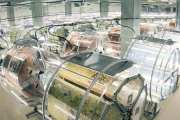 全人工光照、3 倍產能:日本最大芽菜超級工廠