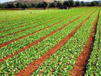 Il punto sull'Agricoltura [@SpazioEconomia] CorriereAl 3