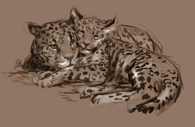 Jaguar study 2