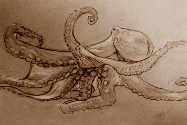 Octopus study 1