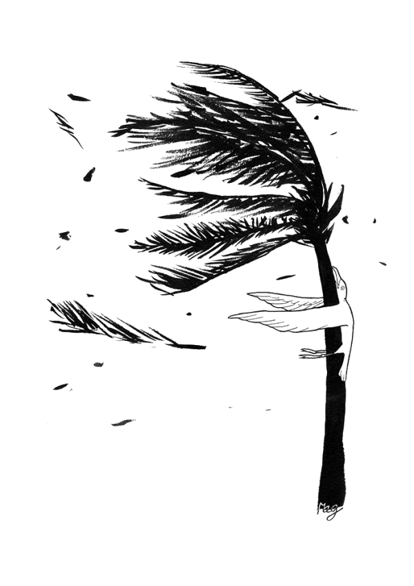 Ink drawing of a seagull stuck in a coconut trunk by the storm's wind.