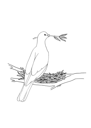 Drawing of a dove holding a wisp in it's beak. The dove is perched in it's nest looking up toward the future.