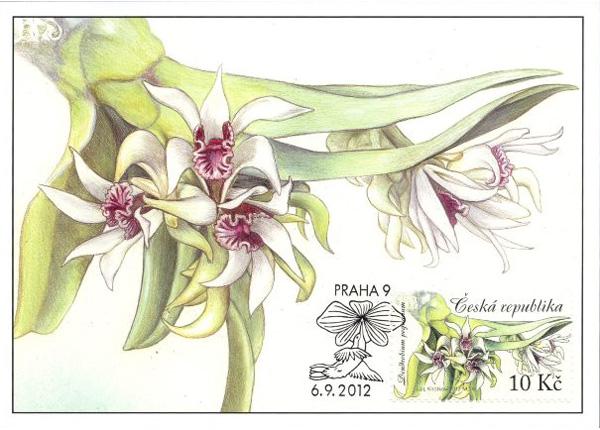 Cartes Maximum: Pěstitelství – Krása orchidejí