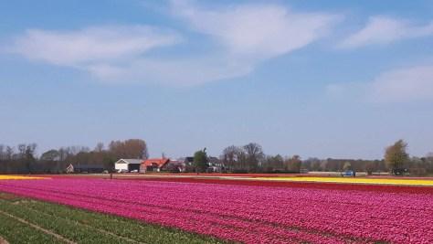 Happy Birthday Keukenhof! Seit 70 Jahren erfreut der schönste Frühlingspark der Welt seine Besucher 12