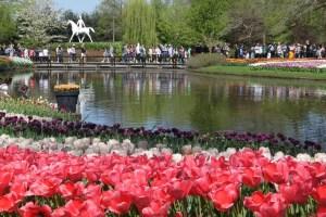 Happy Birthday Keukenhof! Seit 70 Jahren erfreut der schönste Frühlingspark der Welt seine Besucher 8