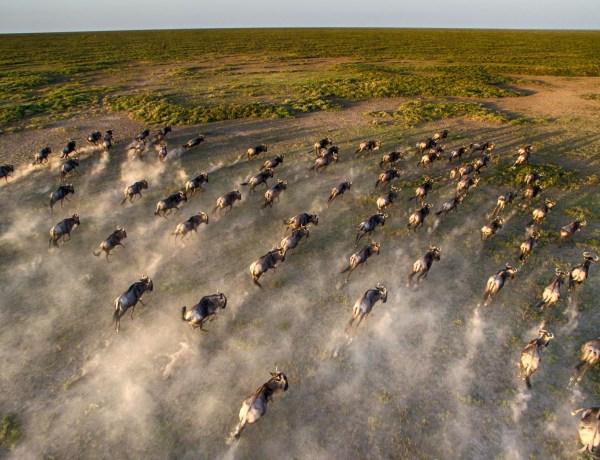 Die Große Migration in Afrika