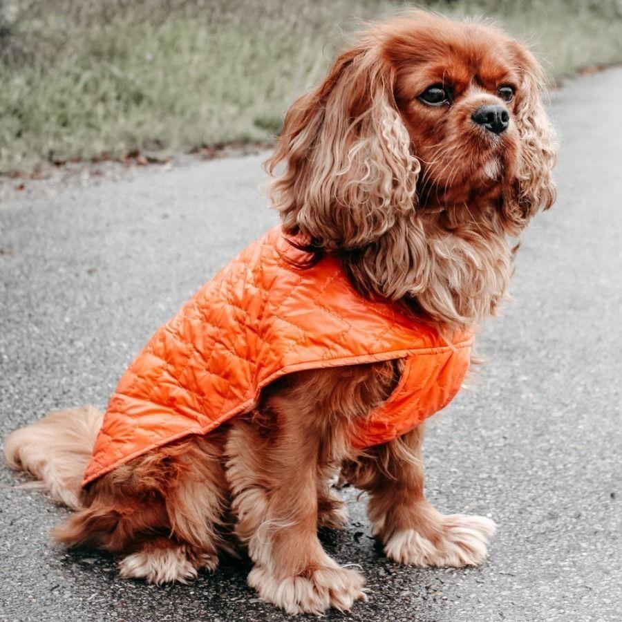 Makerist-Naehen-fuer-Hunde-17-tolle-Accessoires-fuer-Vierbeiner-Hundejacke-Louie