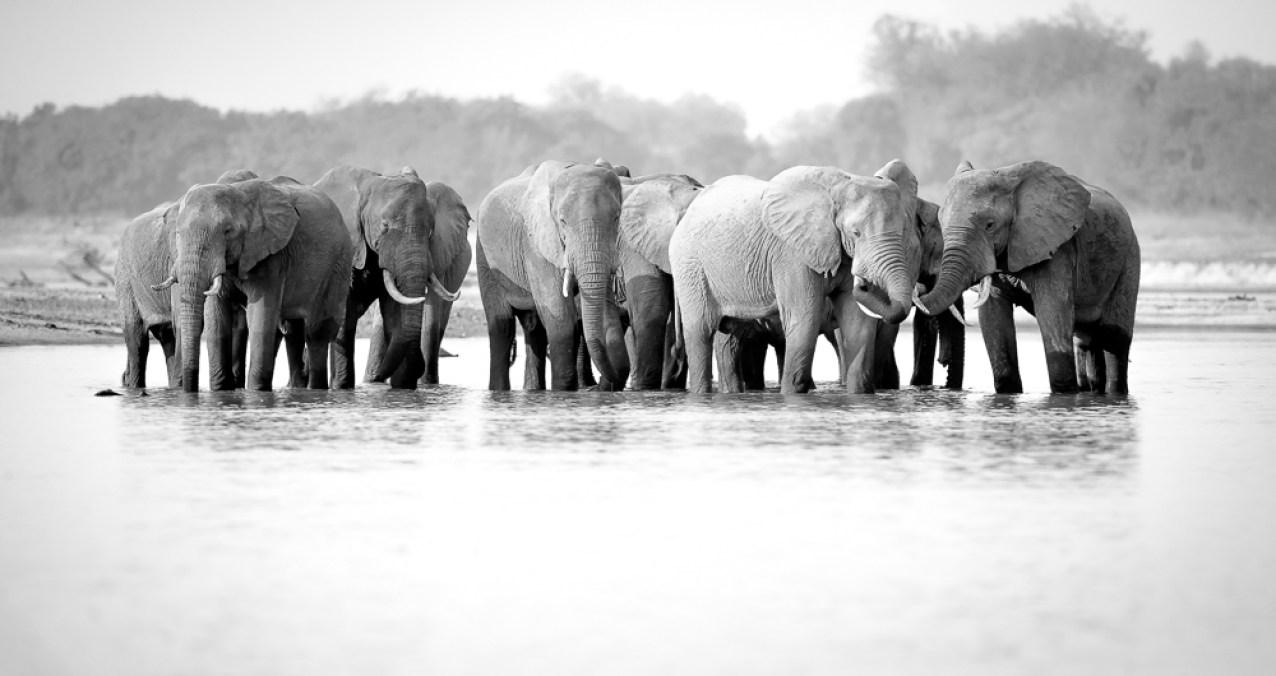 A herd of elephant at a waterhole