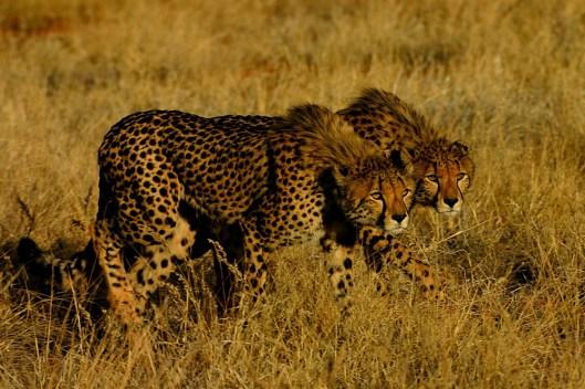 © Tswalu Kalahari Reserve