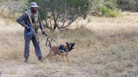 Anti-poaching exercise