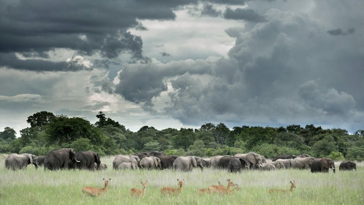 Elephant landscape in Kafue
