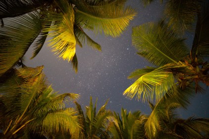 Stars and palm trees