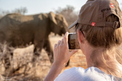 Person taking photo of elephant, Klaserie Private Nature Reserve, South Africa