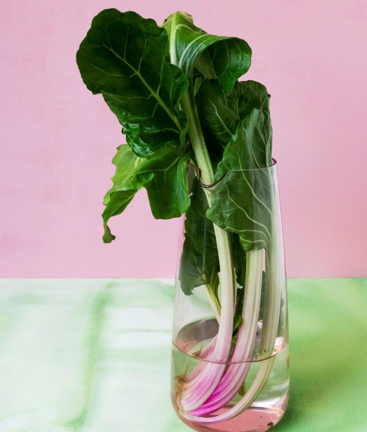 rhubarb in a glass of water on pink and green background