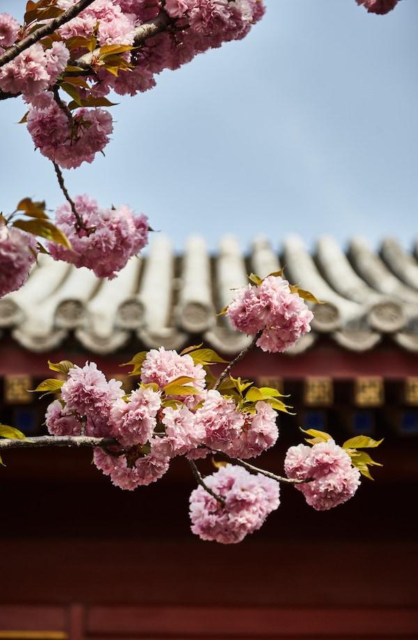 Aman Summer Palace, china wellness retreat, luxury urban wellness retreat