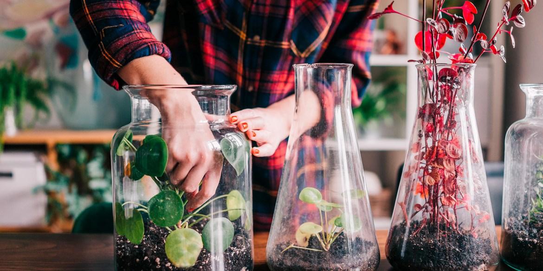 annaffiare le piante in vacanza