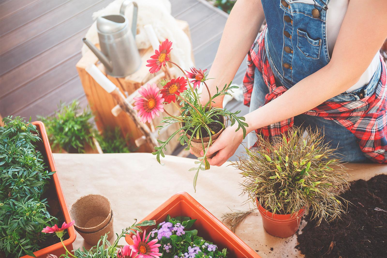 Coltivare In Casa Piante Aromatiche coltivare erbe aromatiche in giardino: 5 consigli - magazine