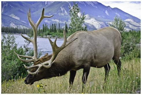 Alberta e British Columbia