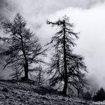 Il Parco Naturale Orsiera Rocciavré