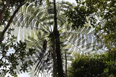 La flora lungo le pendici del monte Kinabalu