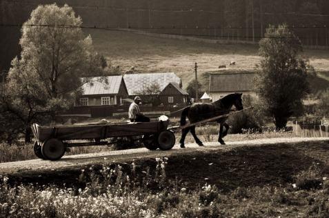 Cavallo carretto