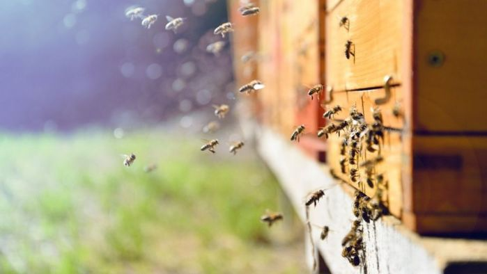 Why are bees so important