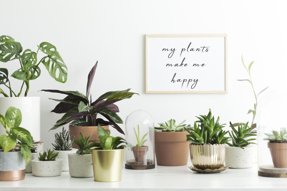 花や観葉植物は効果的