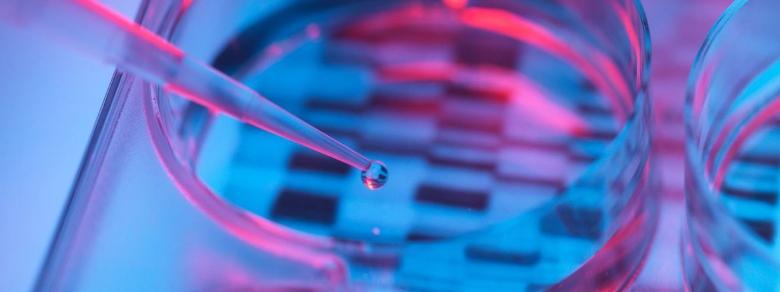 Dna di embrioni umani modificati grazie alla tecnica Crispr