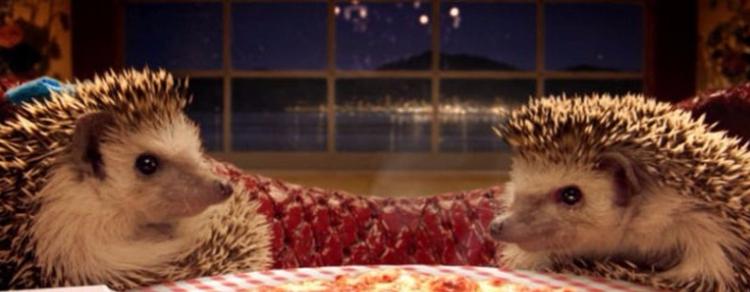 Strani incontri negli Hedgehog Cafe giapponesi