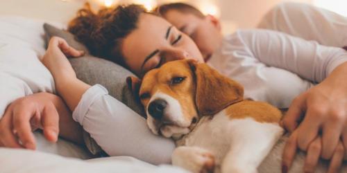 benefici nell'adottare un cane
