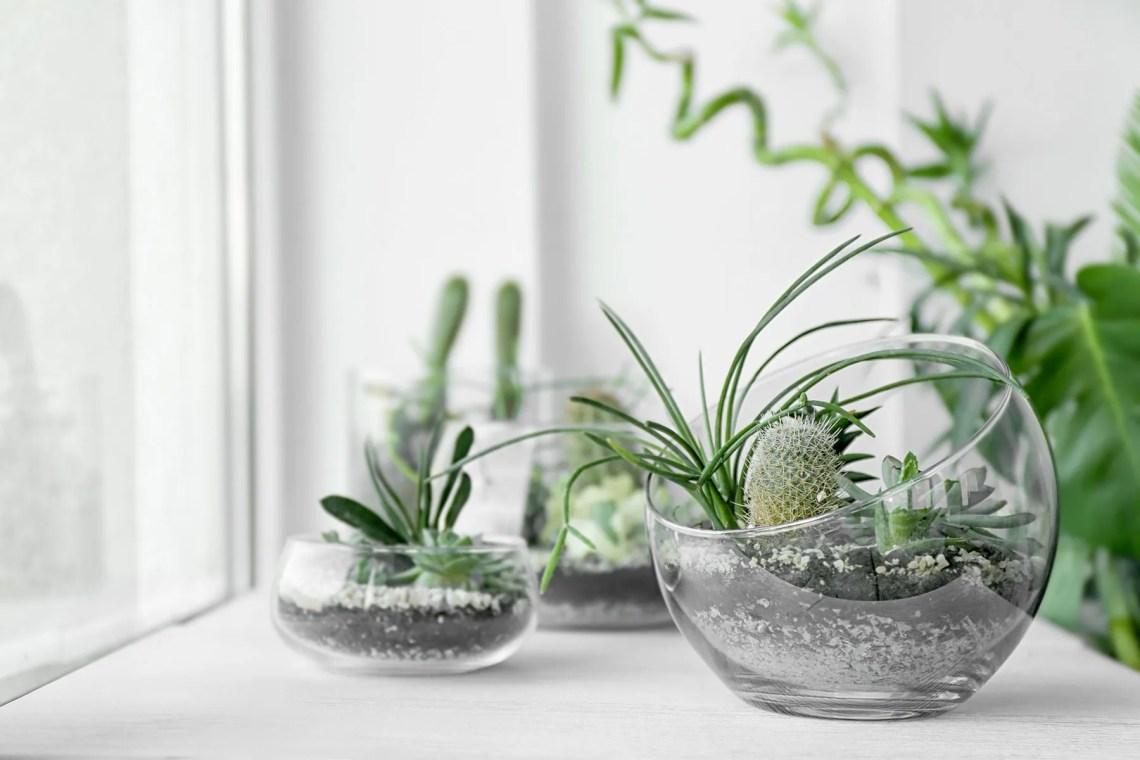 piante interior design - piante grasse in bocce vetro