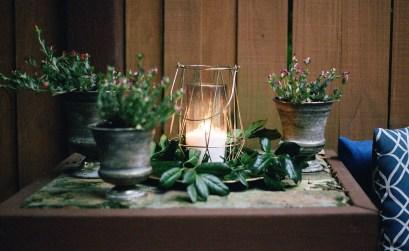 rimedi naturali contro le zanzare - piante aromatiche - barbecue palazzetti