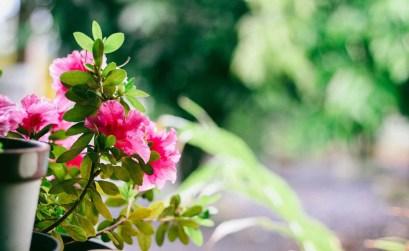 fiori per l'estate - balcone