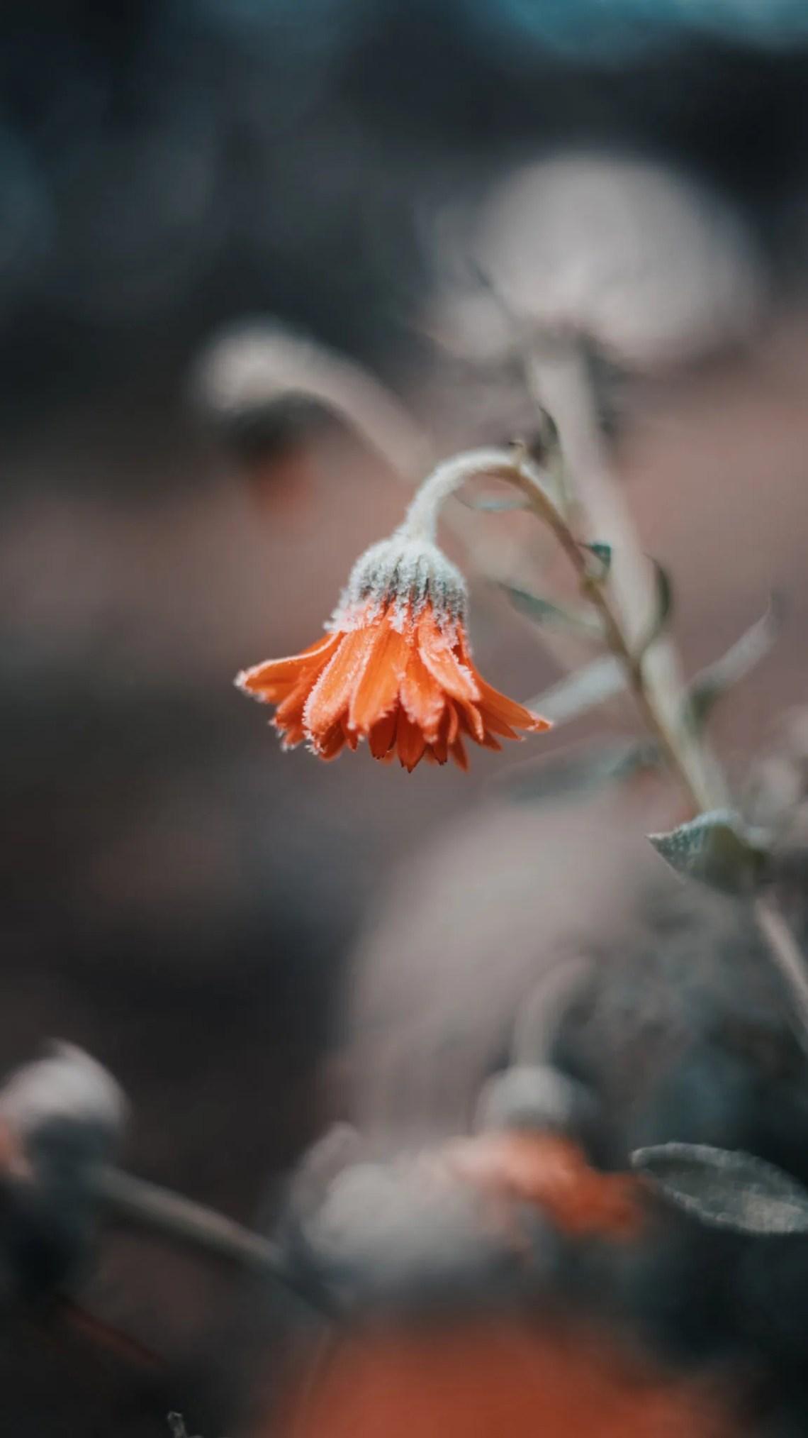 proteggere-le-piante_fiore