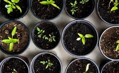 creare-un-orto_vasetti-piante